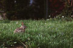Kaninchen auf einer Wiese - Foto von Peter Lloyd - StockSnap.io